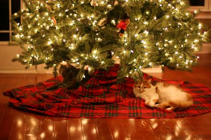 CatsUnderTree2008