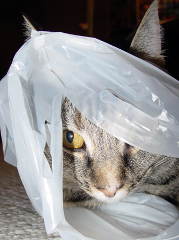 Gidget_bag_lady_2